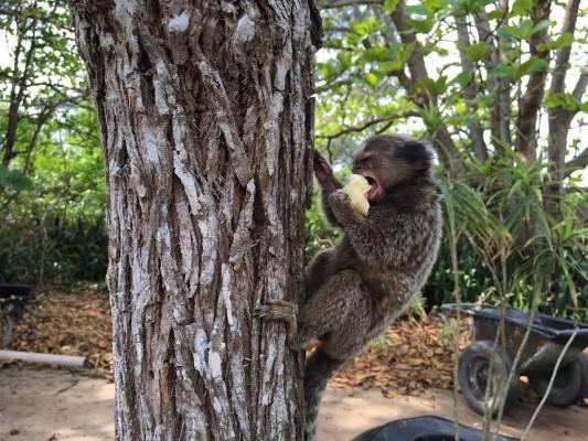 Banane schmeckt super!